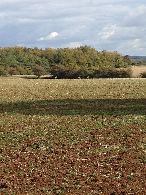 Ashwell Barn Cotswolds Accommodation - Countryside